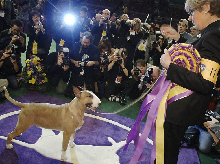 Westminster Dog Show At Madison Square Garden Best In Show Dogs Of Past 10 Years Lisa Singh